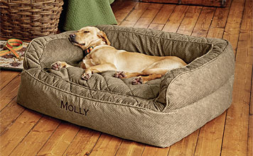 Dog Bed Zone